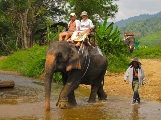 Win Elephant Camp in Khao Sok National Park
