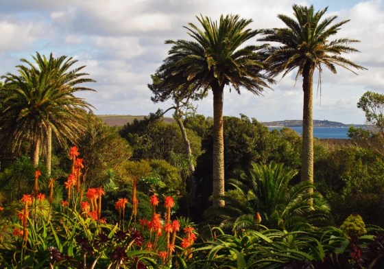 Palm trees sway in the breeze on England's Isles of Scilly.
