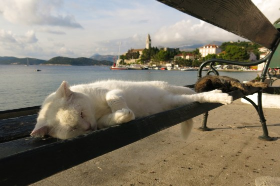 Who says it's a dog's life? Lopud's park benches are the perfect place for a cat nap.