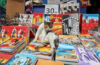 A cat makes itself comfortable atop a stack of paintings in Essaouira. Charities and local citizens help to care for the city's large feline population. Copyright Amy Laughinghouse.