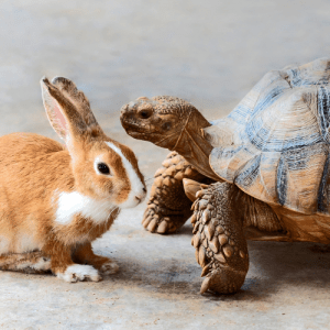 tortoise and hare - Work in Progress blog by Amy LeTourneur