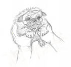 Another pug, 2014