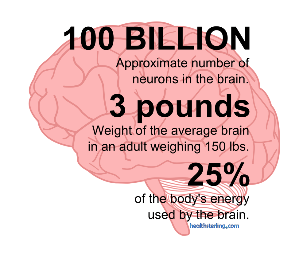 Infographic series on the human body (3/3)