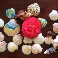 Painting Seashells