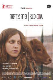 Para Aduma (Red Cow)