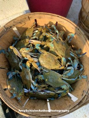 2020 crabs