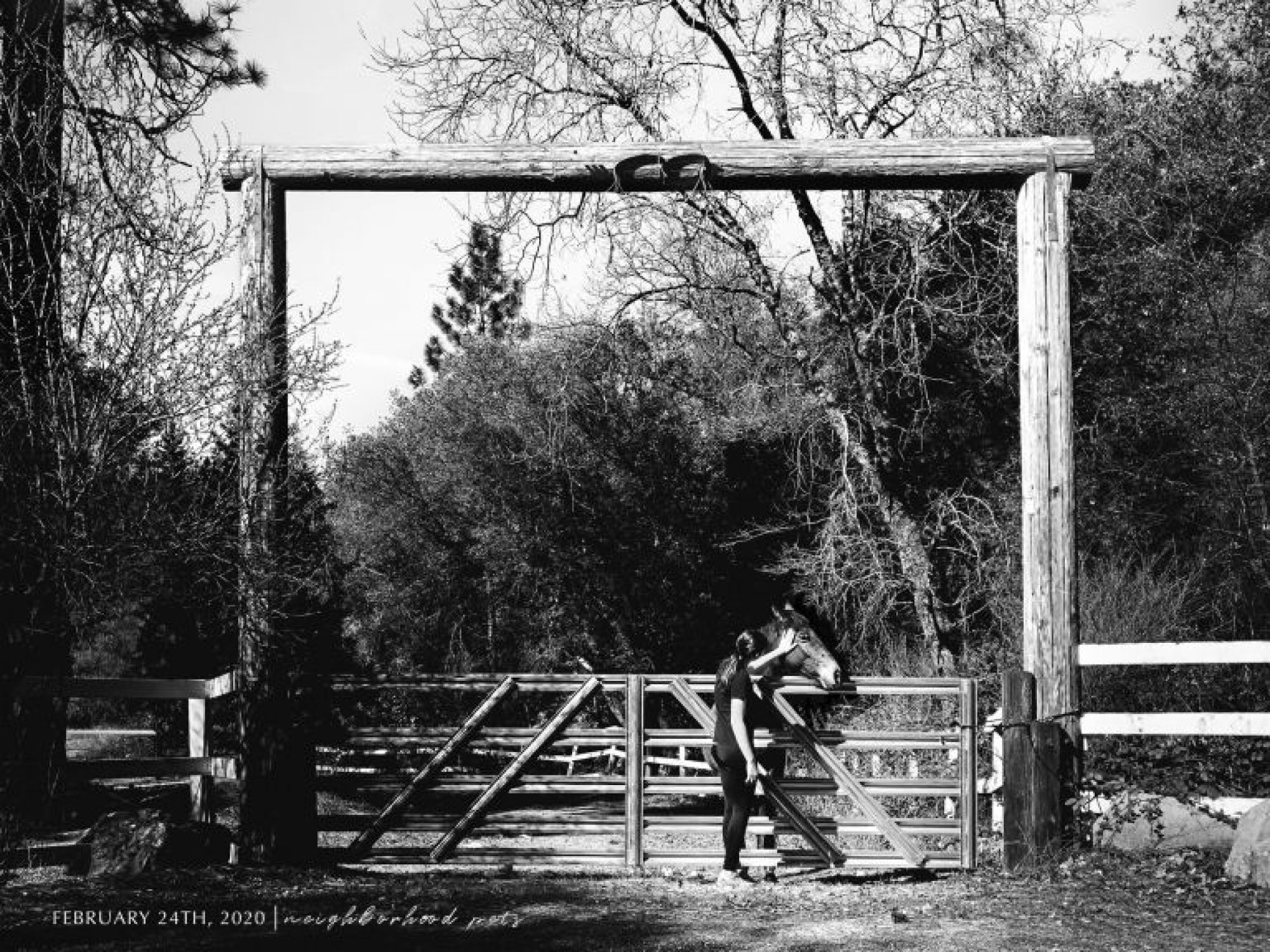 black and white of a girl petting a horse from far away