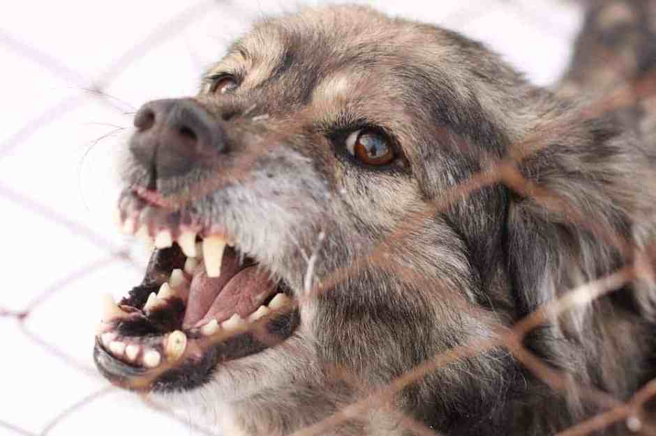 Angry aggressive barking dog in a steel cage