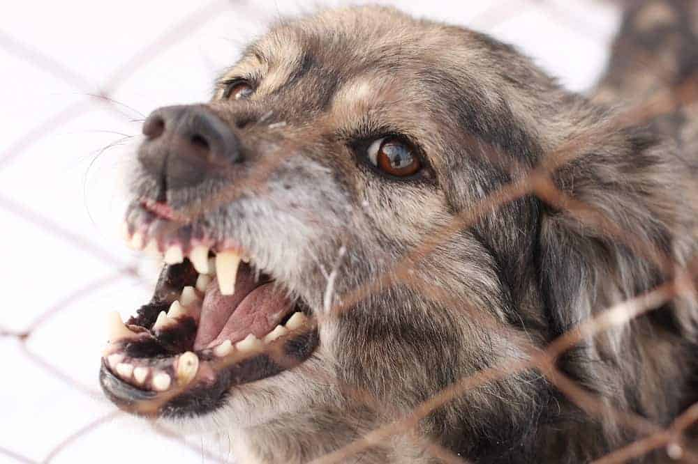 how to make an aggressive dog stop biting