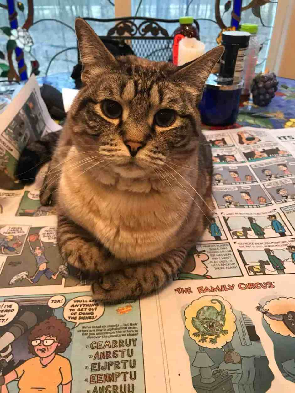 why cats sit on newspaper