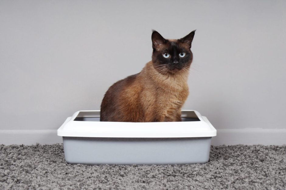 cat urinary blockage