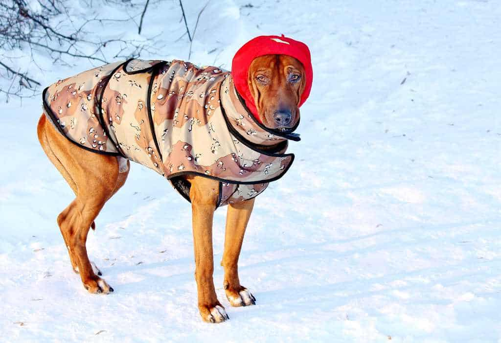Cold Protection For Hot Dogs Amp Cats