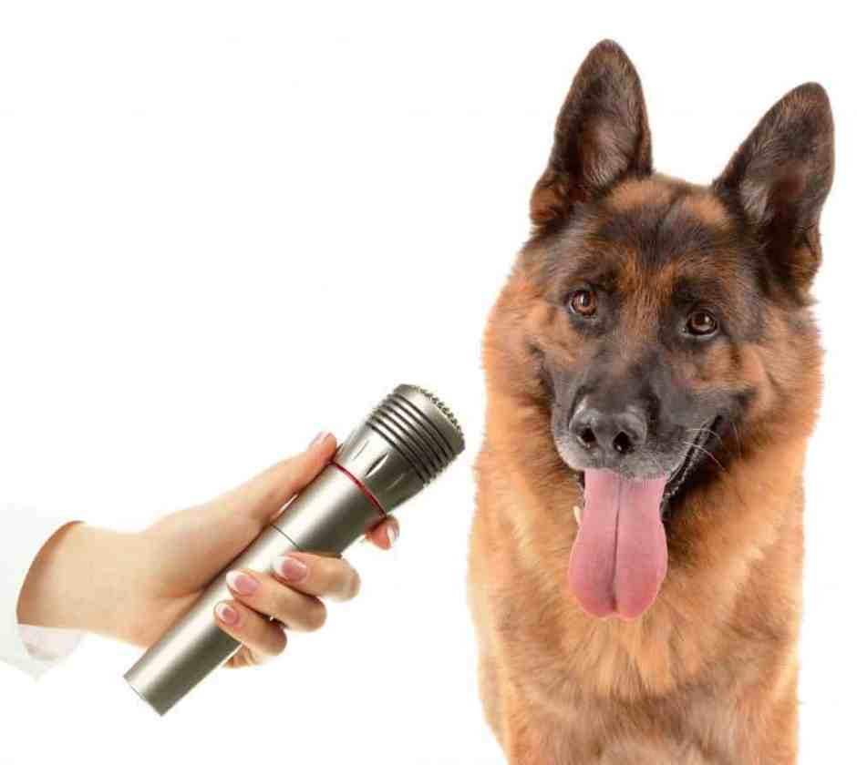 dog voice