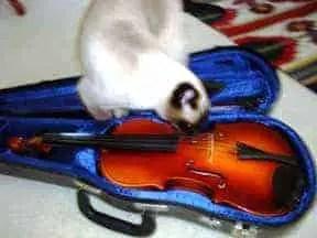 Seren-Violin