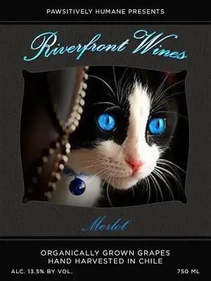 Merlot-Tuxie blue eyes