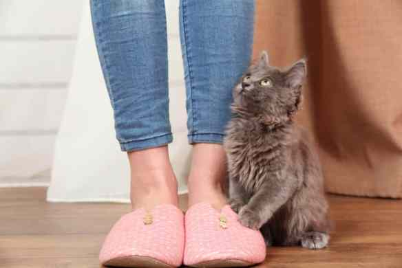 cat chases feet