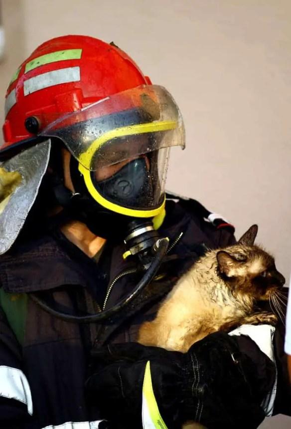 Fire fighter saving cat
