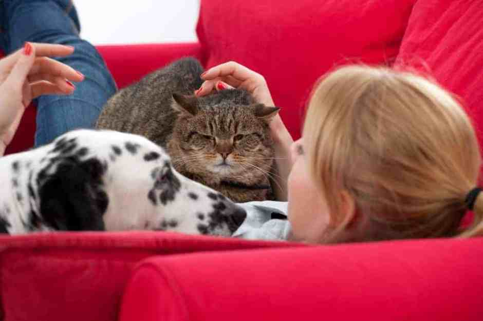 Young woman with  cat and dog
