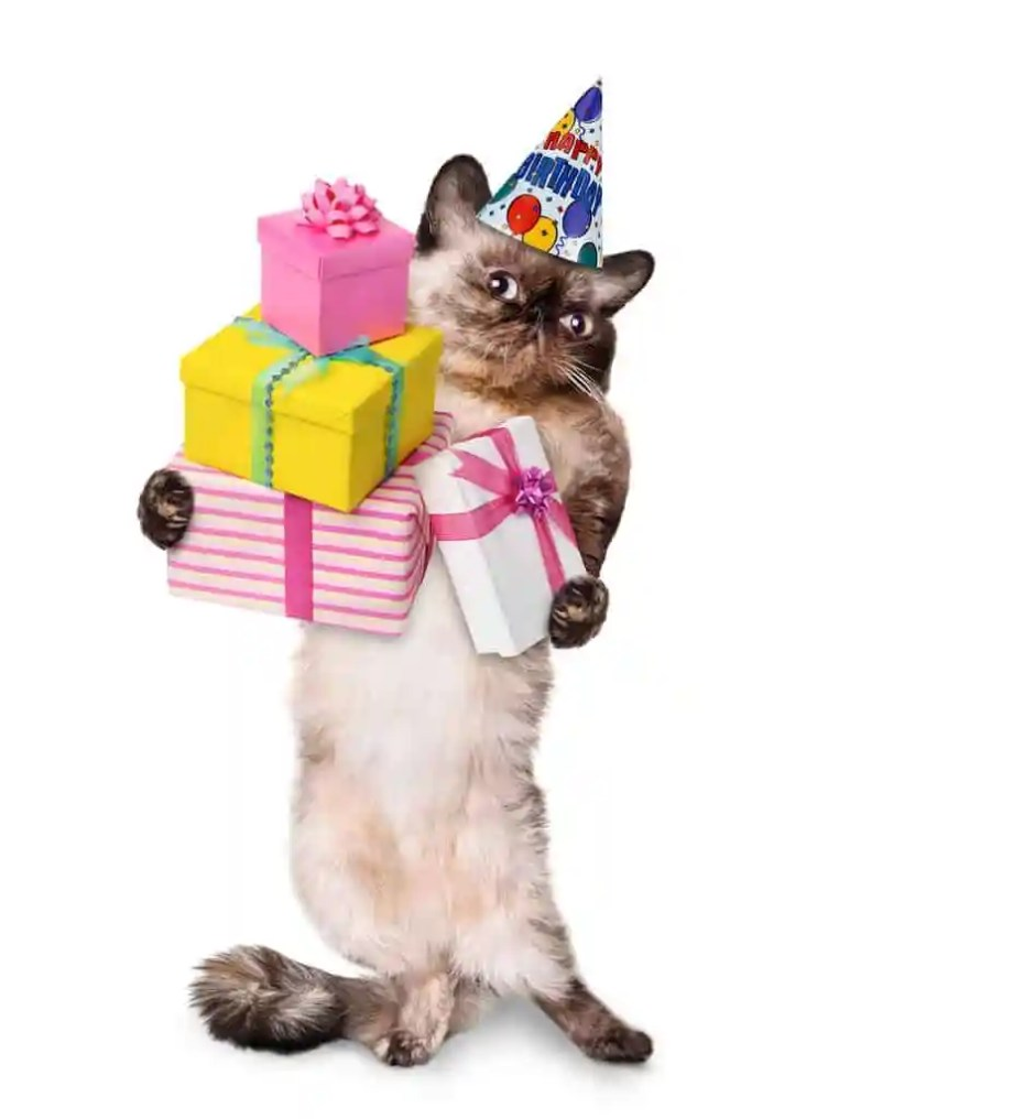 CatBirthday_49873051_original
