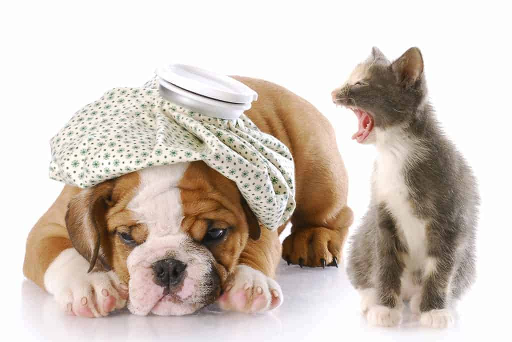 Image result for images- cat shouting to dog