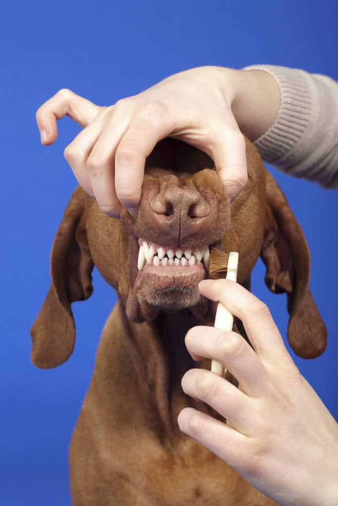 How to Brush Dog Teeth