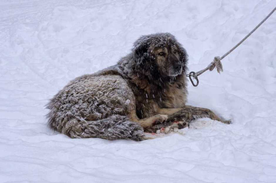 DogSnowTied_39630455_original