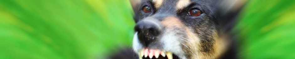 stop dog attacks