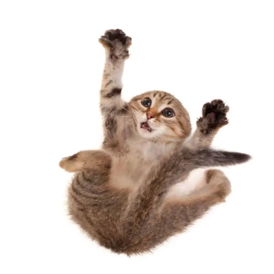 kitten & cat falls