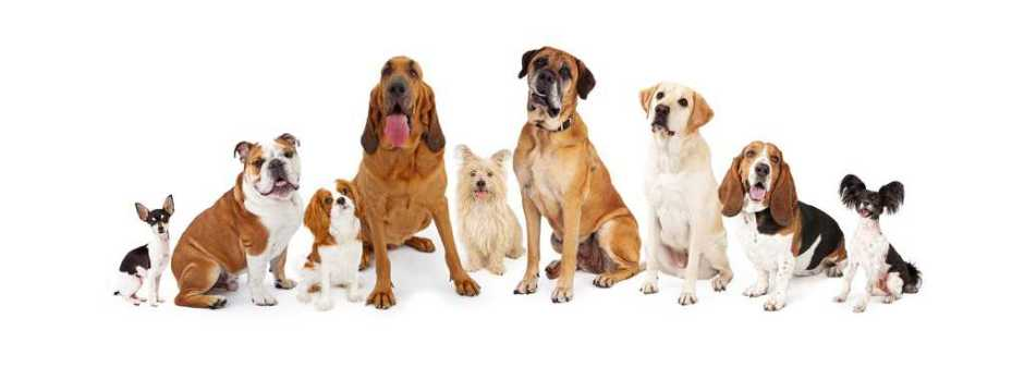 A large group of common dogs of different breeds that are various sizes