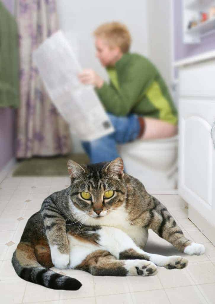a person sitting on the toilet reading the newspaper