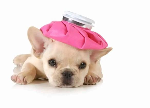 puppy diarrhea