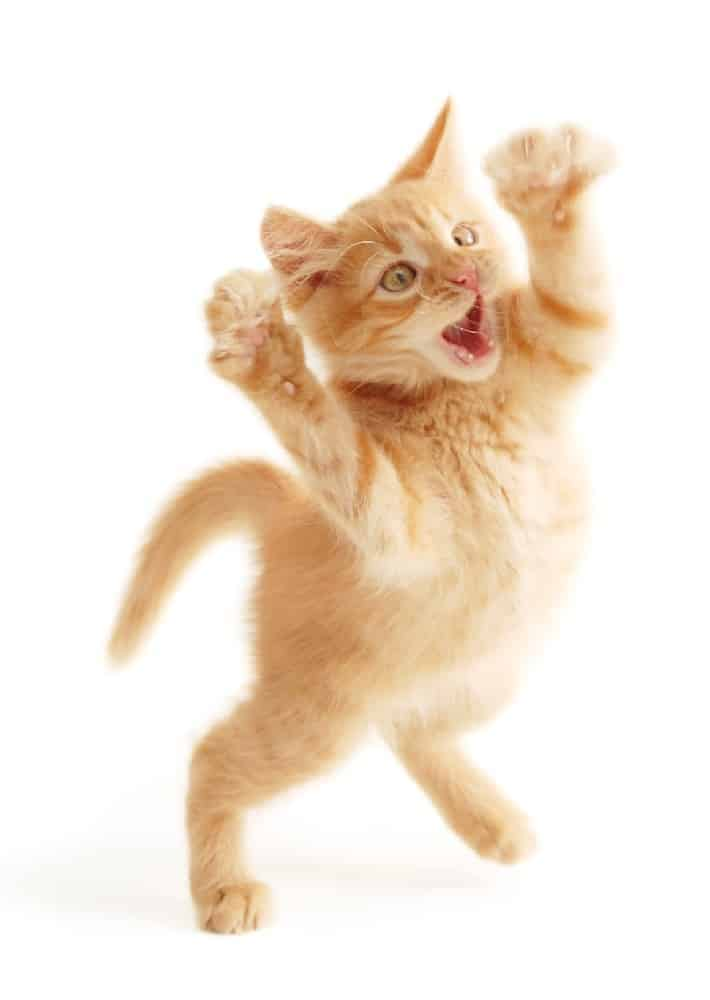 Cat Fight: 10 Tips for Stopping & Preventing Cat Fights ...