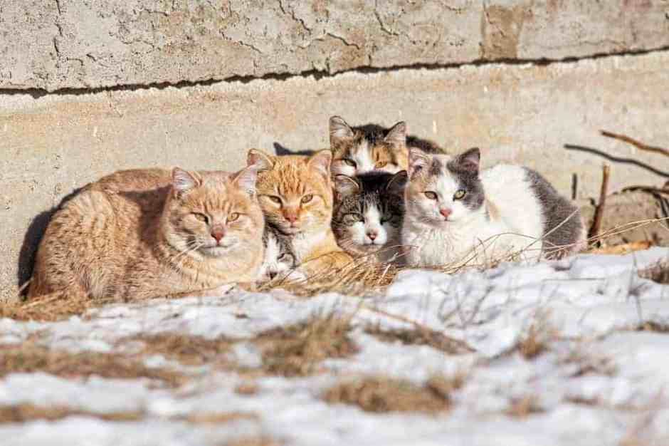 A group of feral cats huddled together to keep warm, near the wall of an old abandoned home . Taken during -28C weather.