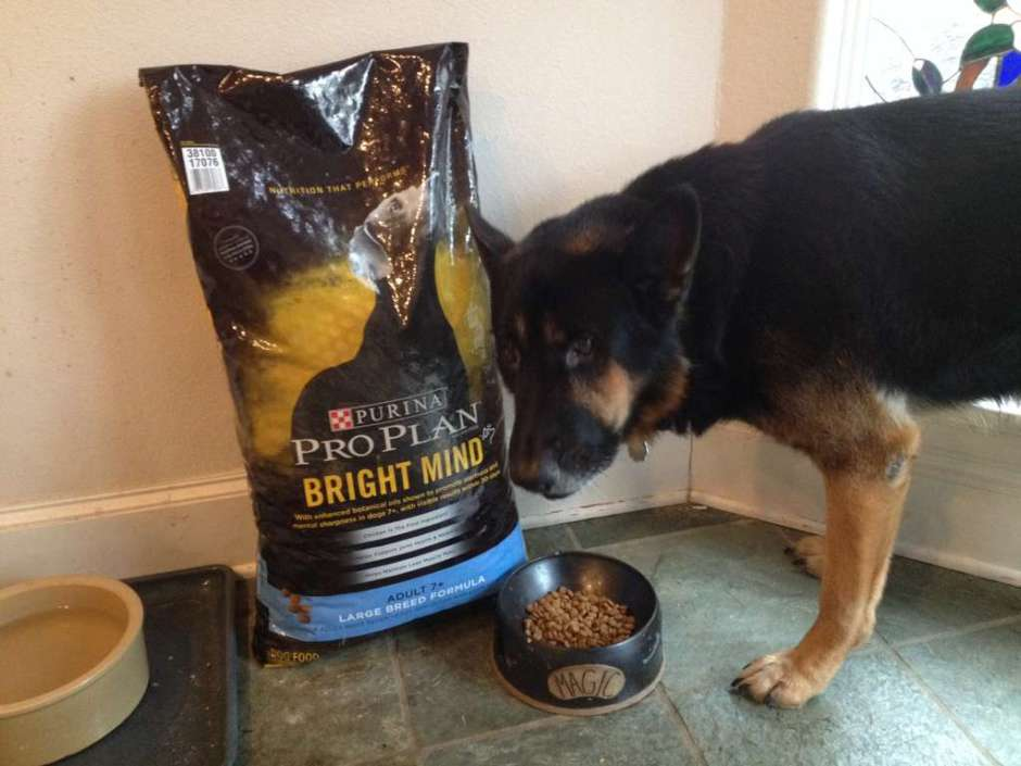 German shepherd with Purina ProPlan Bright Mind dog food