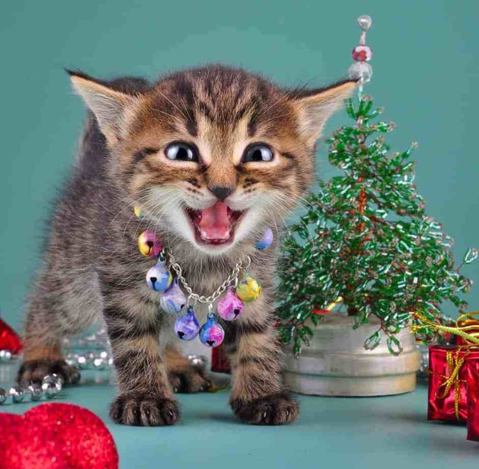 Cat safe Christmas tree