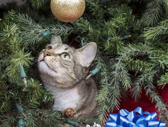 Holiday lights risk electrical shock