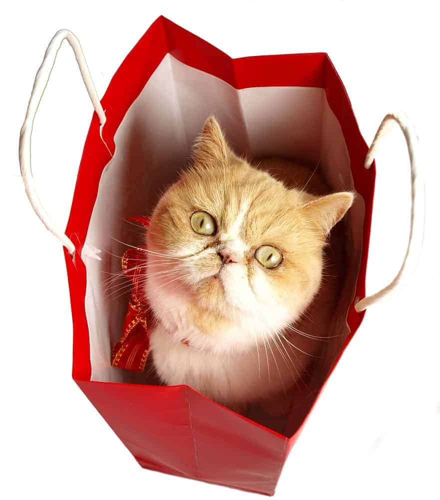Cat bag safety