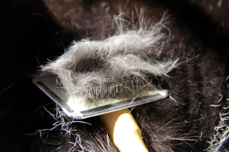 fur shedding