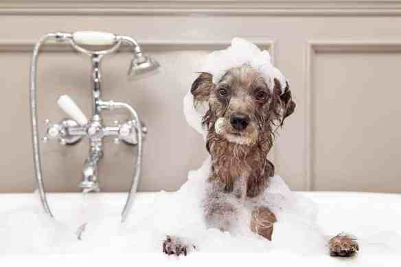 skunked dog bath