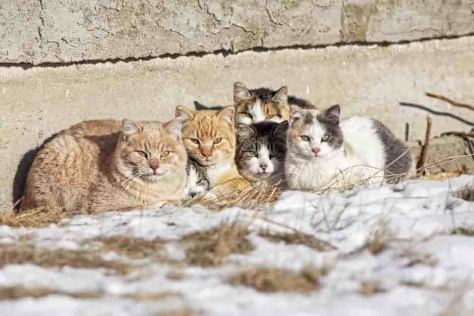 Cold weather pet protection tips protect feral cats outside dogs - Keeping outdoor dog happy winter ...