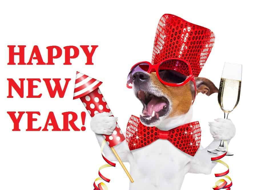 new years dog fireworks fears