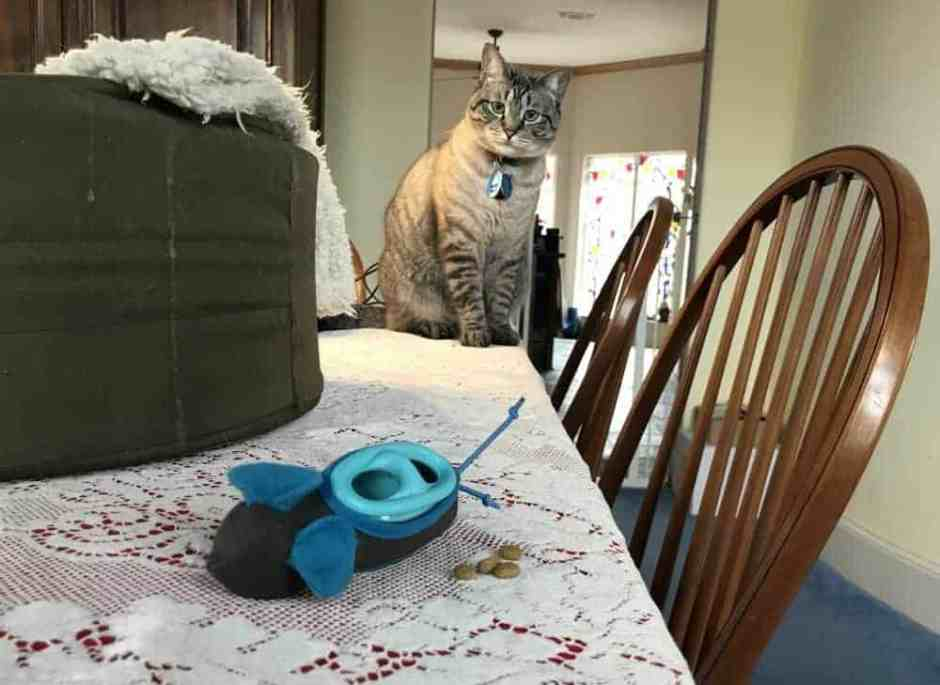 nobowl cat feeding system