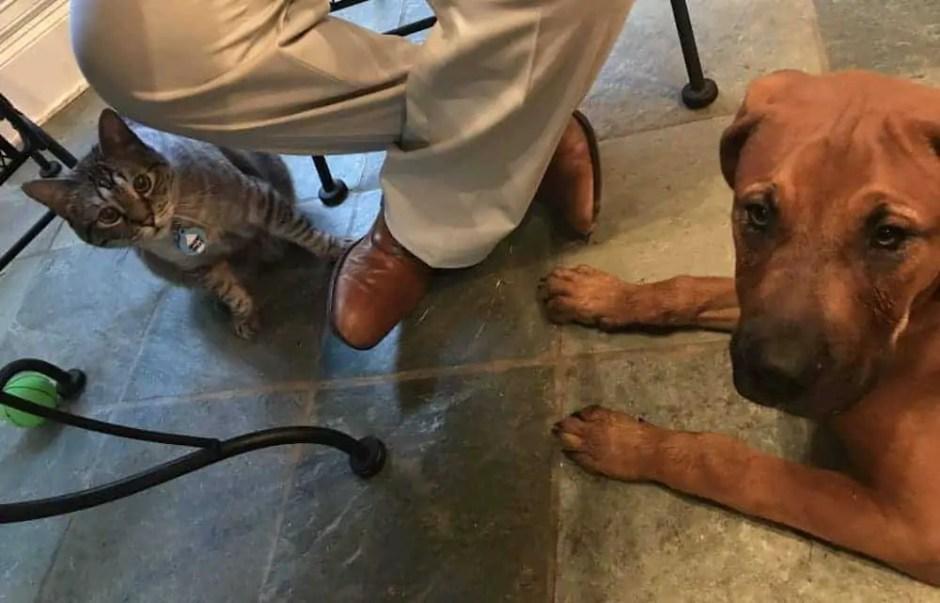 dog cat intros