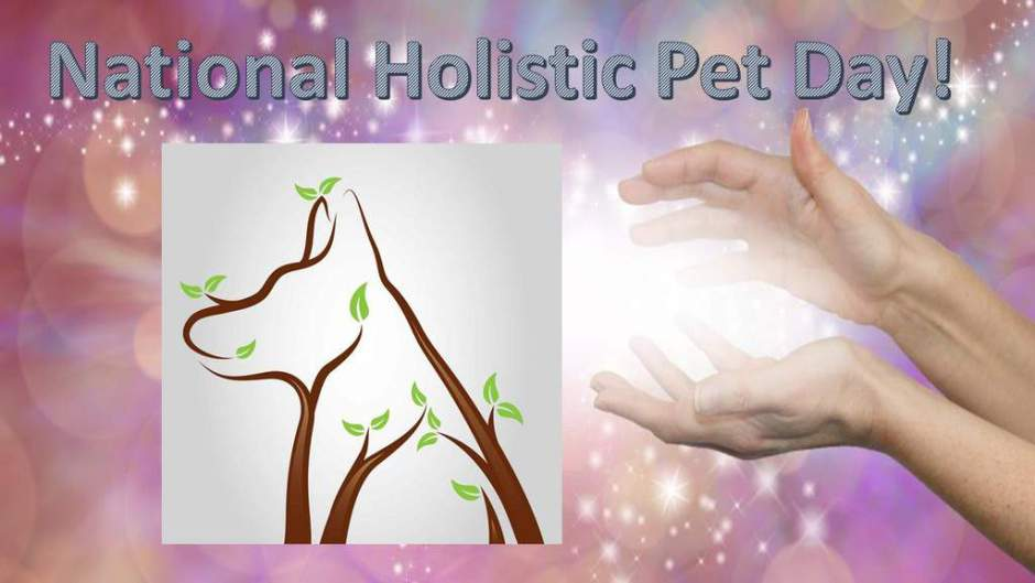 holistic pet