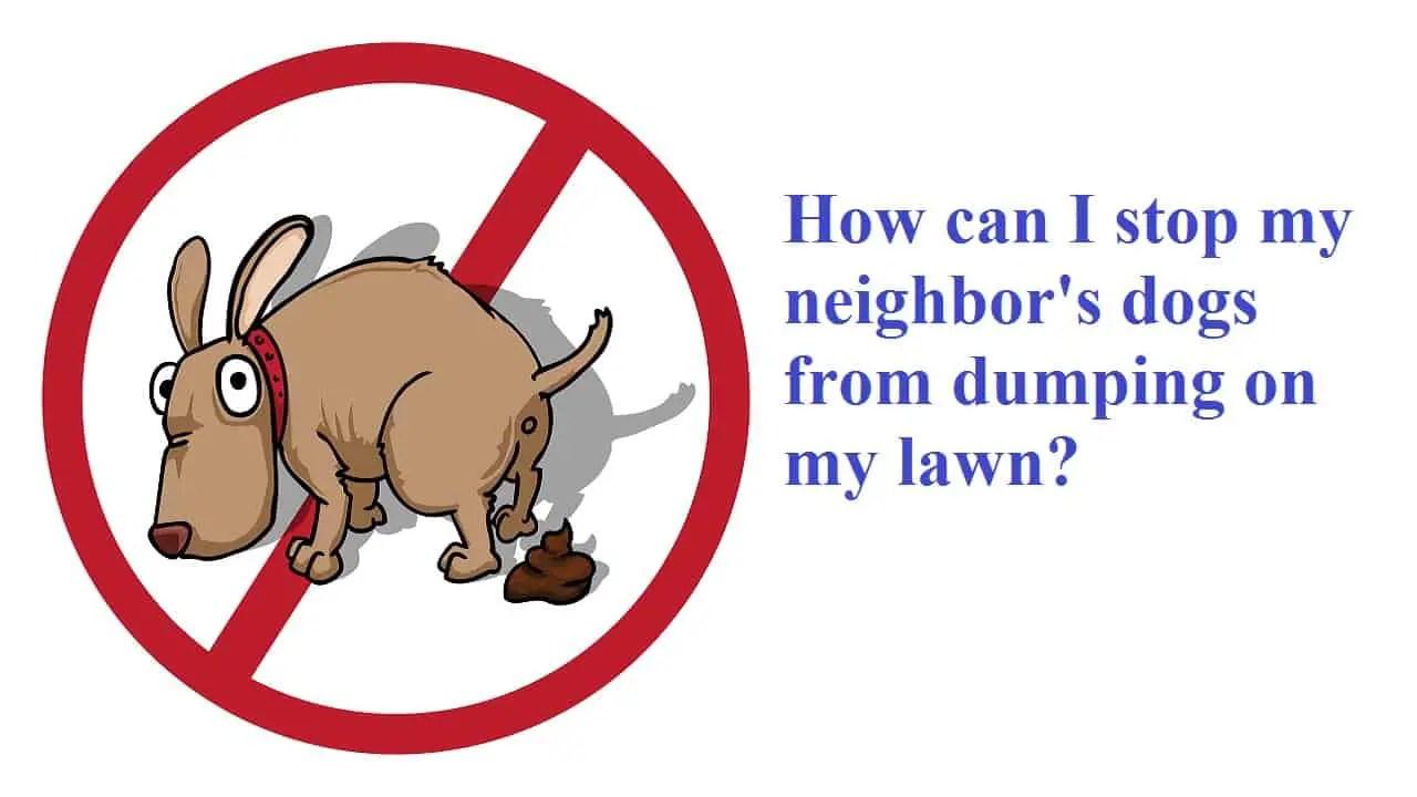 stop dog pooping in yard