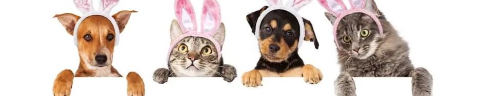 pet easter dangers