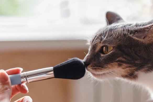 scent enrichment for cats
