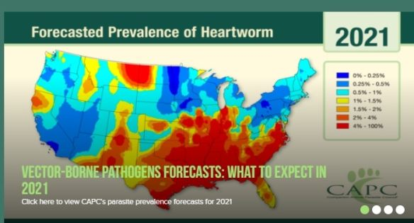 Heartworm map
