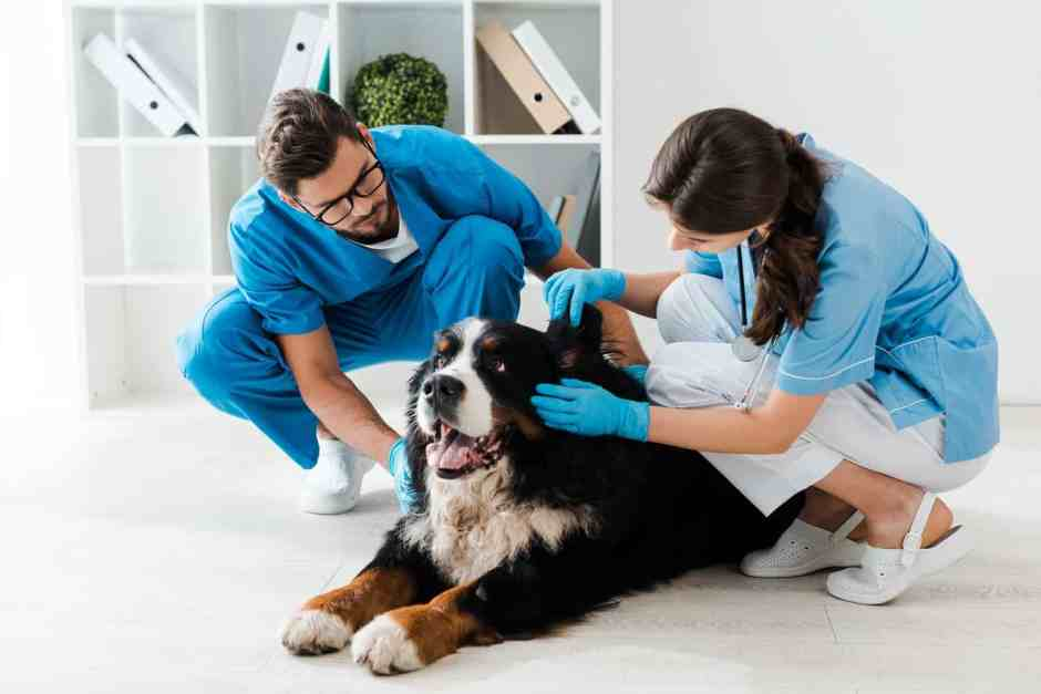 why vets take dogs to the back