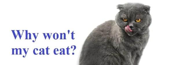 pet won't eat